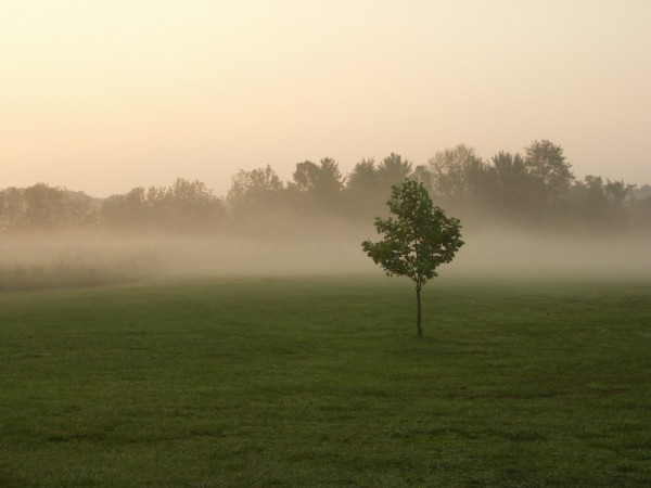Fog at Camp Lutherhaven