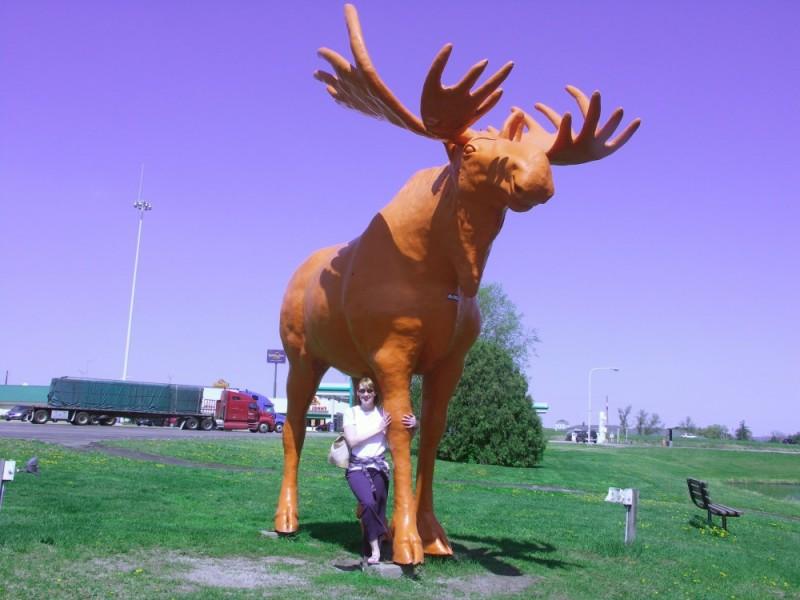 Orange Moose