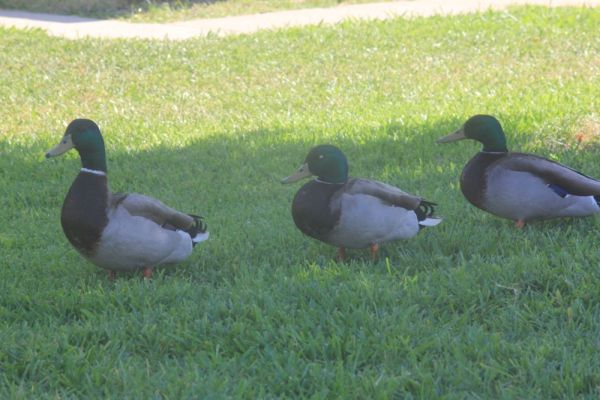 Yard Guests