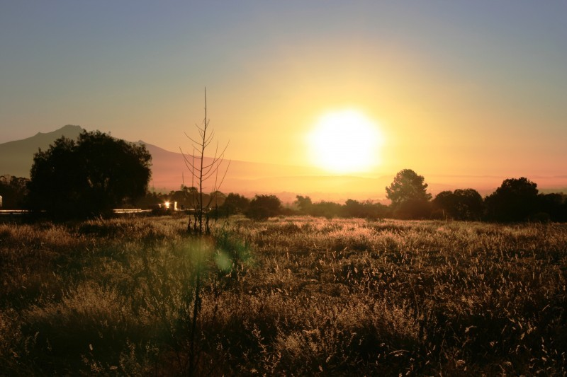 Trigo y Sol, wheat and sun