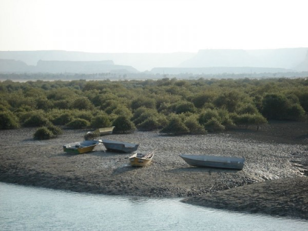Qeshm Island- Hara Jungle