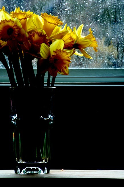 Daffodils in a Pint Glass