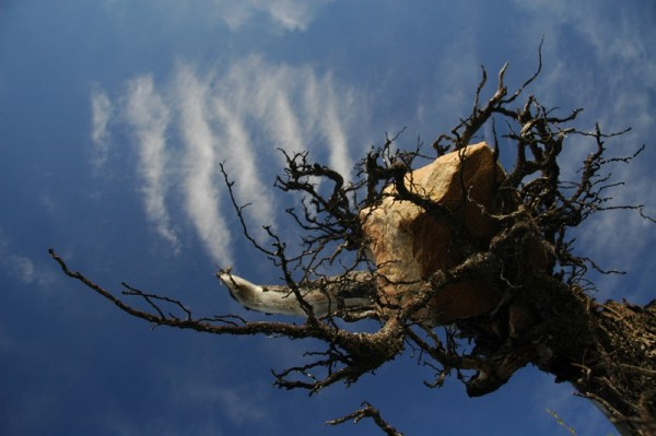 Sky - Root - Rock