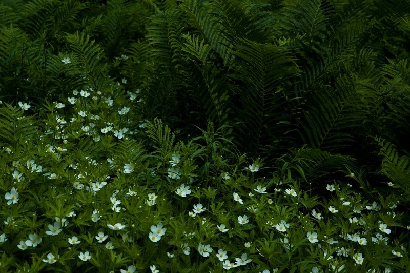 Flowers and Ferns