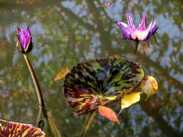 floating bloom, blooming float II