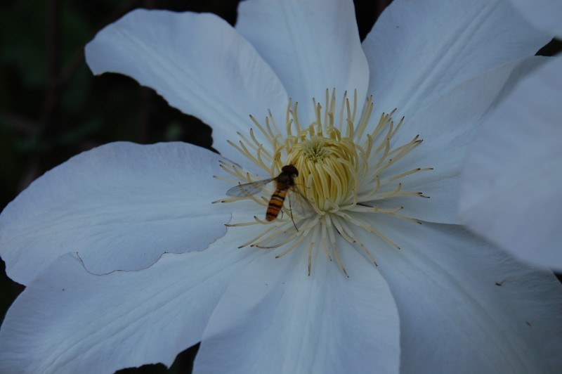 A small horsefly and flower