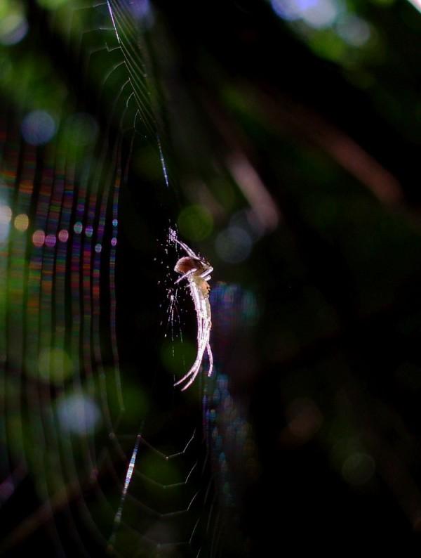 Spider waiting