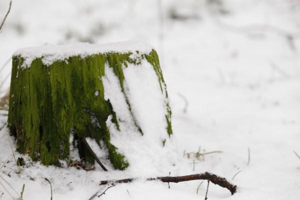 och så var snön tillbaka...