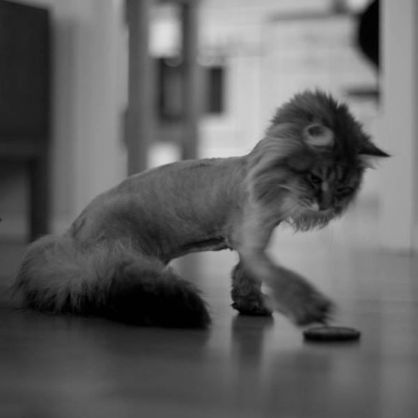 katt 1b - gato 1b - cat 1b