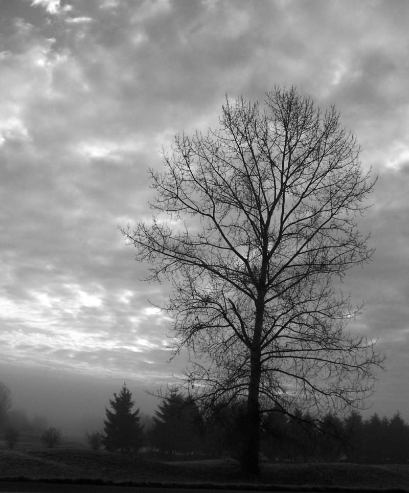 early morning tree