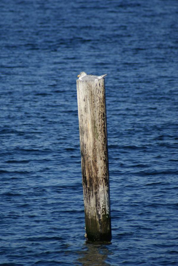 seagull nap