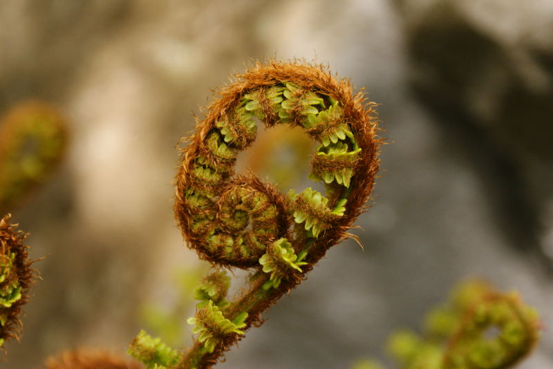 curly plant