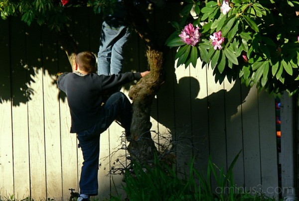 climbing the fence