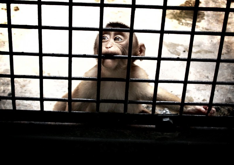 monkeys in my heart, rattling their cages