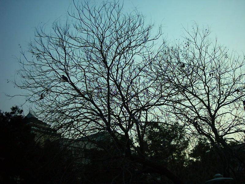de Net, de Tree!