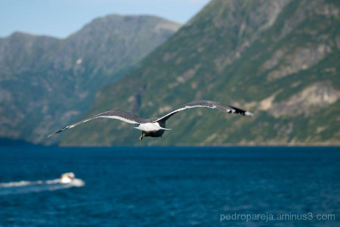 Por mar y aire