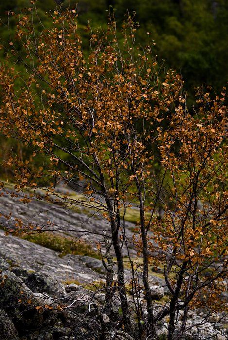 Precoz otoño