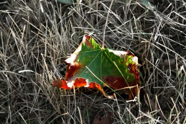 Fall Begun