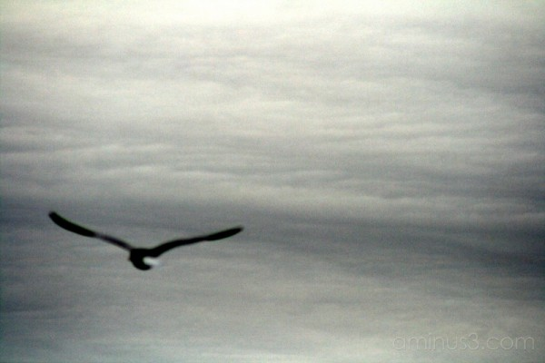 Ominous Flight