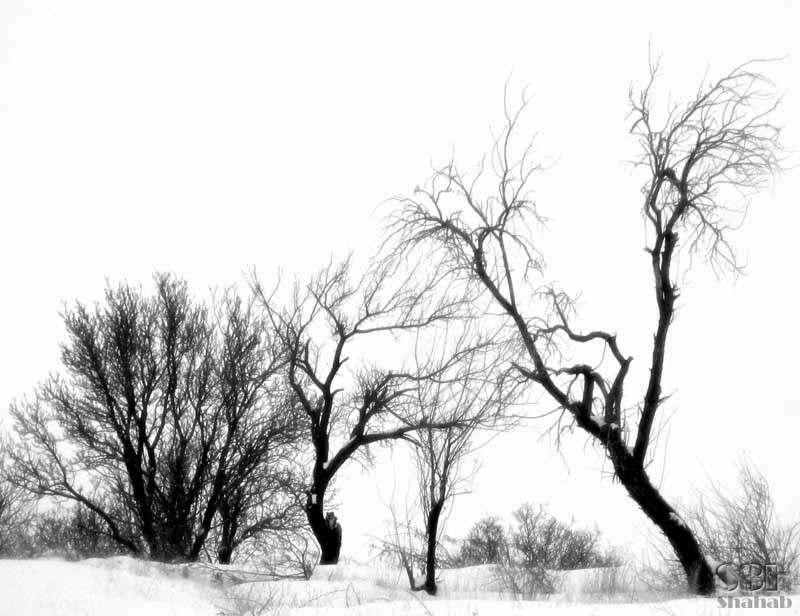 Dishevelled tree