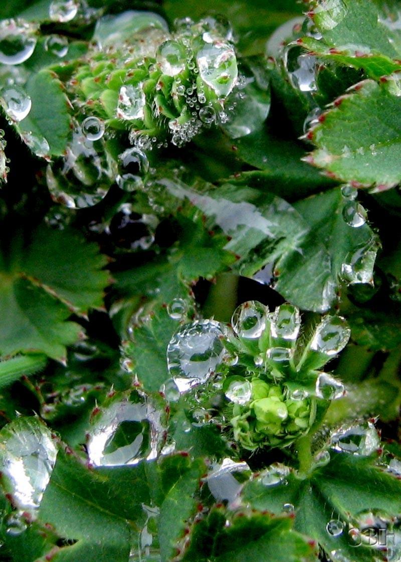 Drops & Droplets