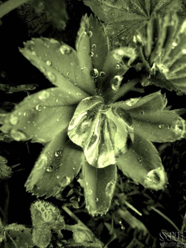 Rain Trace
