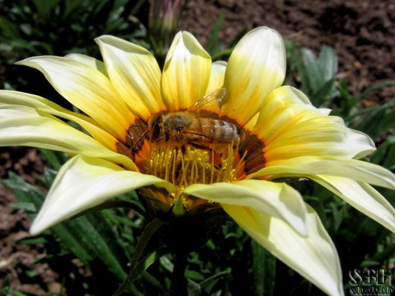 Nuisance Pollen