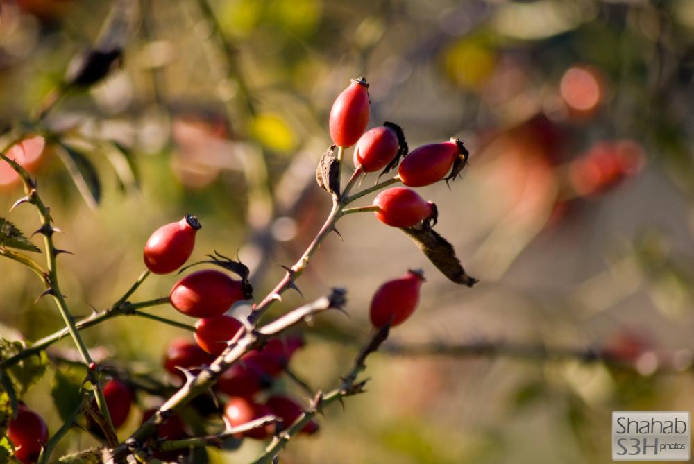 Anonymous Berries