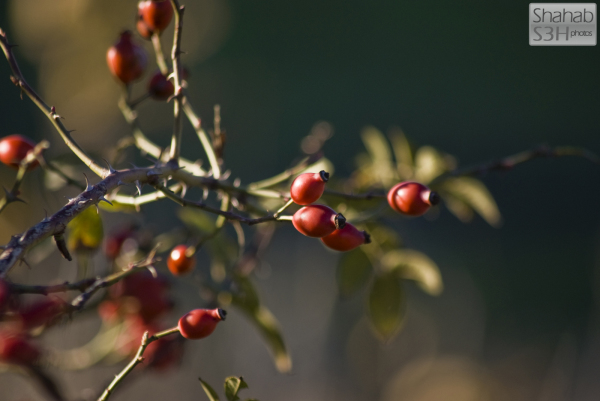 Anonymous Berries (2)