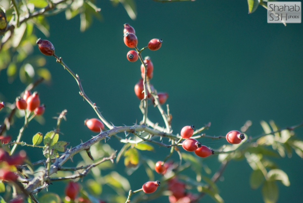 Anonymous Berries (3)