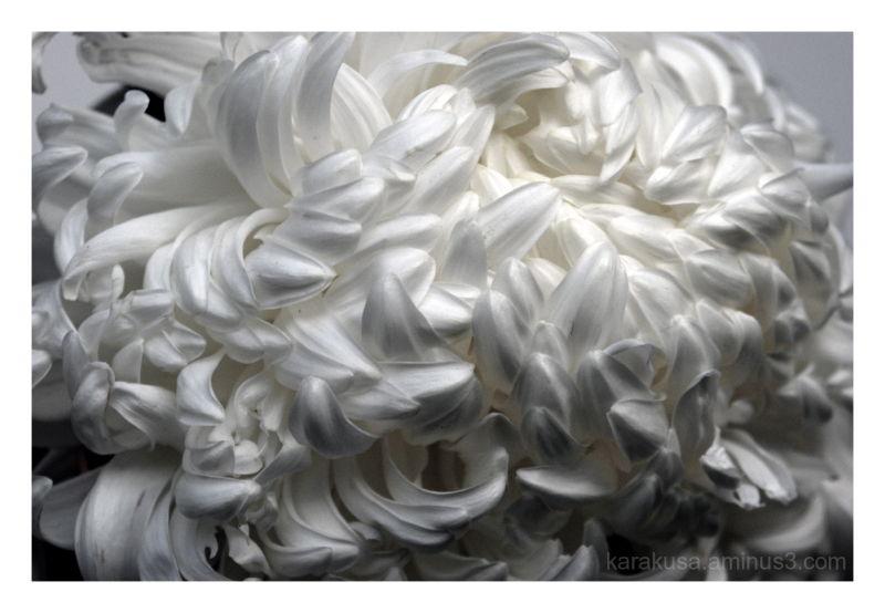 curly hair#4