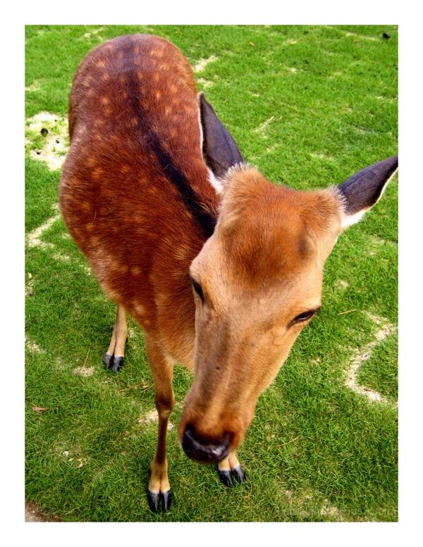 Oh deer! #3