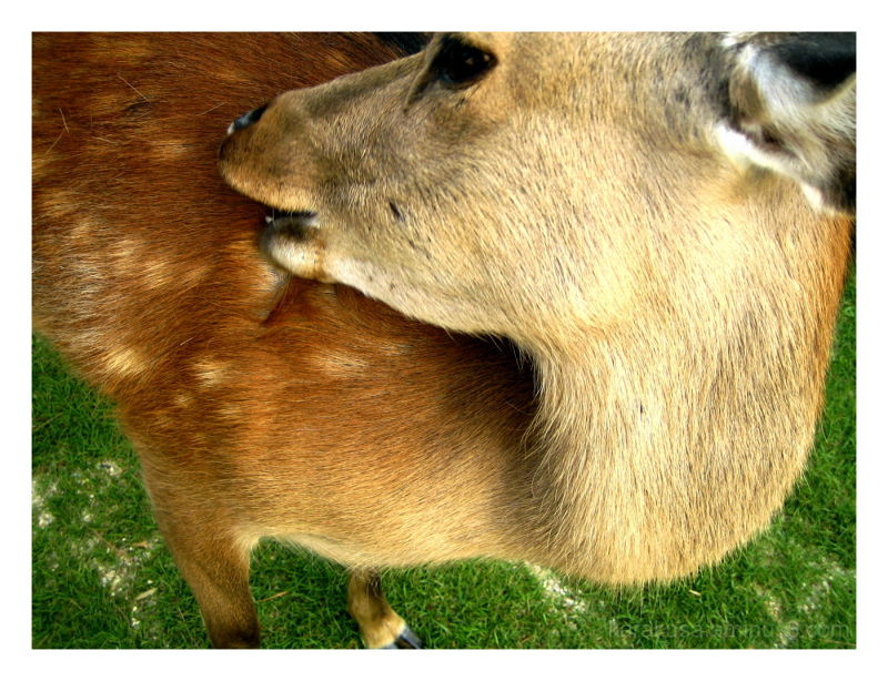 Oh deer! #4