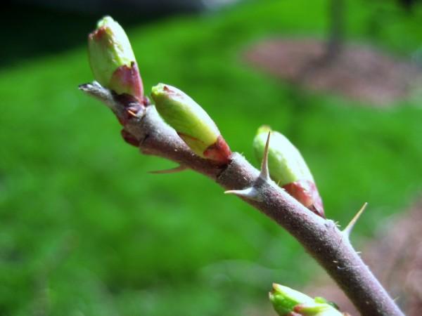 Buds seeing Spring