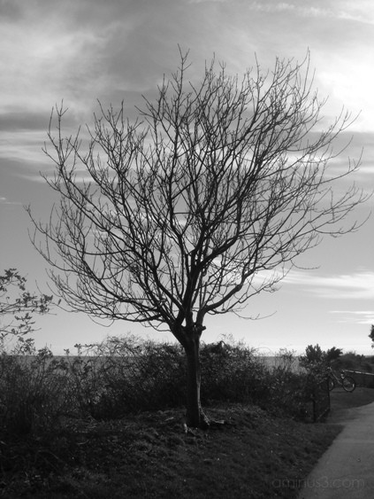 stark barren and beautiful