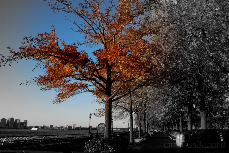 the shades of fall.....