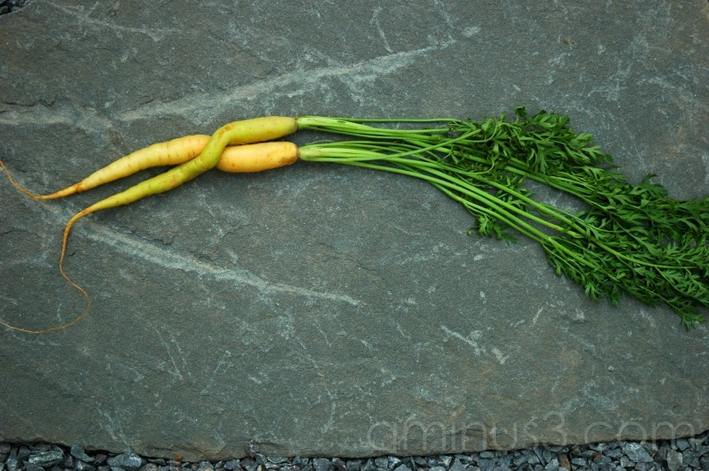 Baby carrots entwined