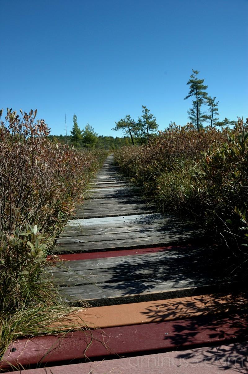 Saco Heath Preserve