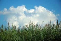 Hudson River grass