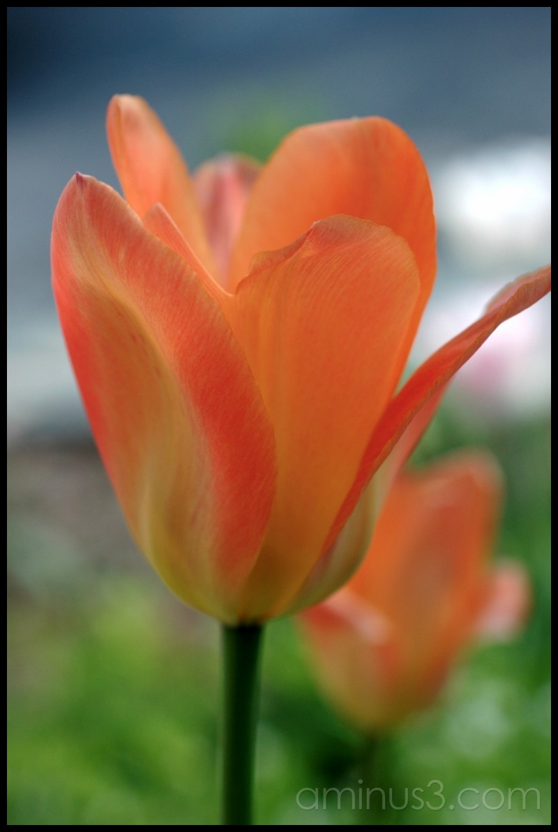 Oh, precious flower