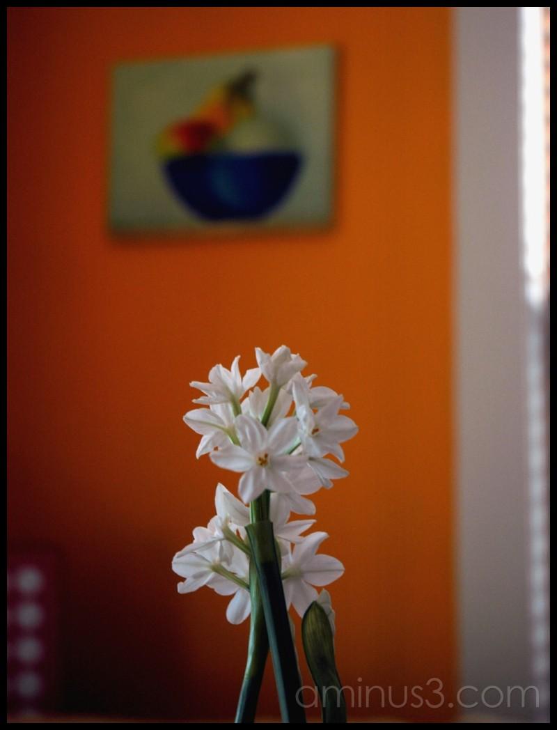 Narcissus still life