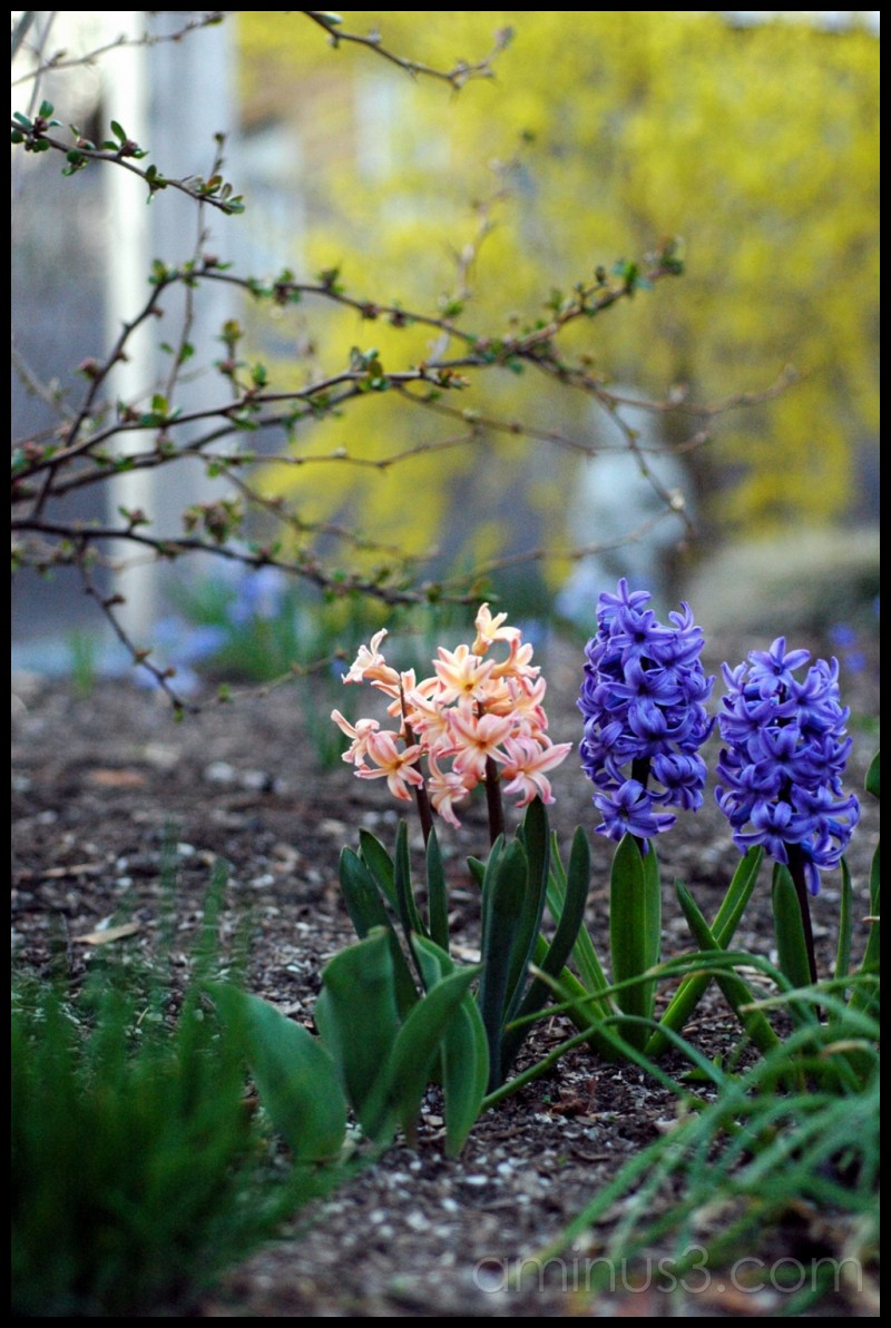 Maine Garden in Early spring