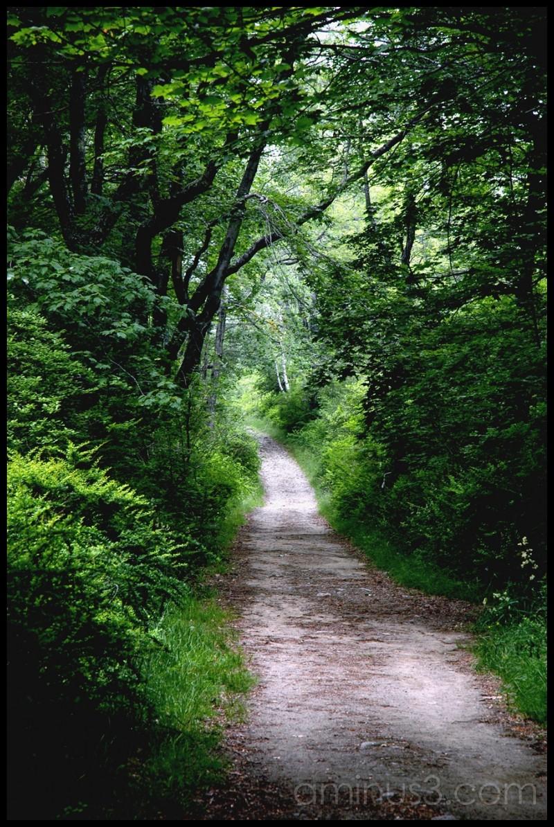 Come, take a walk with me
