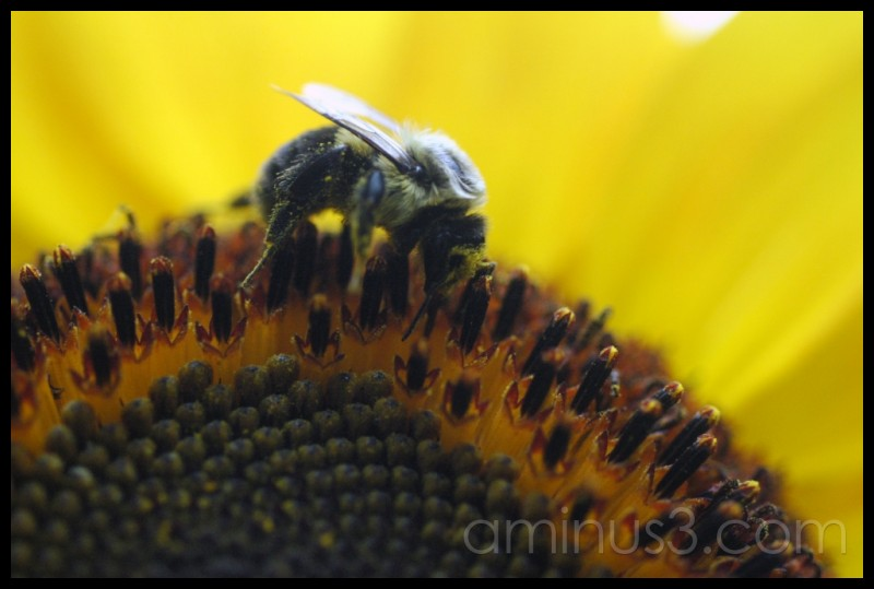 Bee-licious part deux