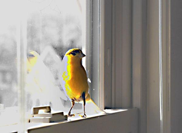 Caruso in the window