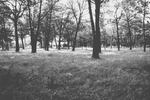 Deering's oaks