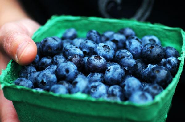 Rebecca's blueberries