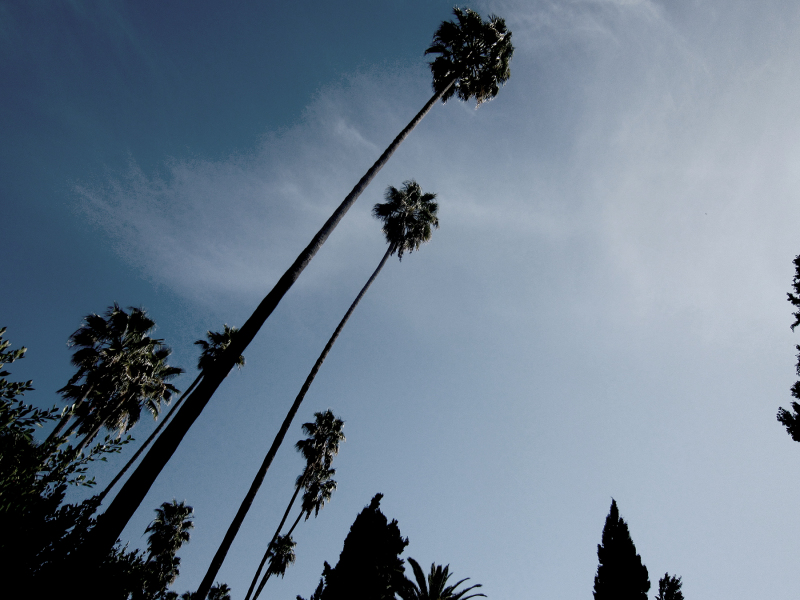 Leaning palms
