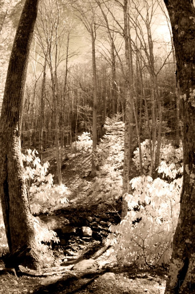 Creekbed in Infared