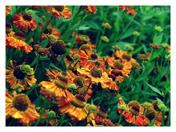 how wonderful this flower tastes